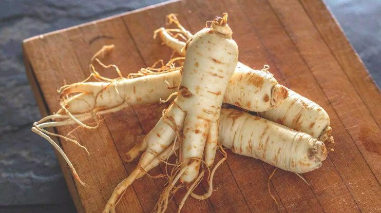 Immune Boost Ingredient Panax Ginseng