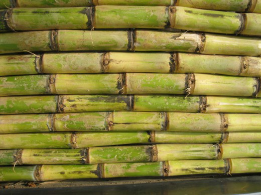 Immune Boost Sweetener Sugar Cane